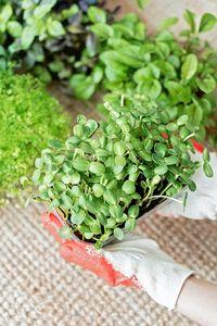 Био храни 3 - растение